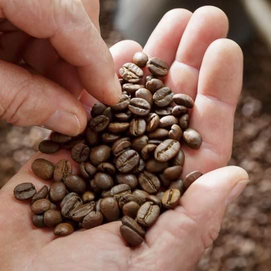 grains de café en mains